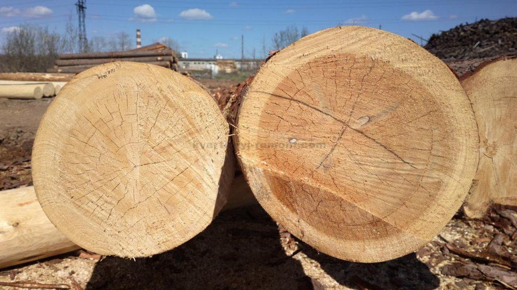 Деревья для сруба